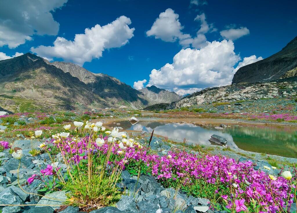 Altai Herbs