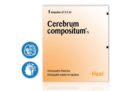 cerebrum-categories