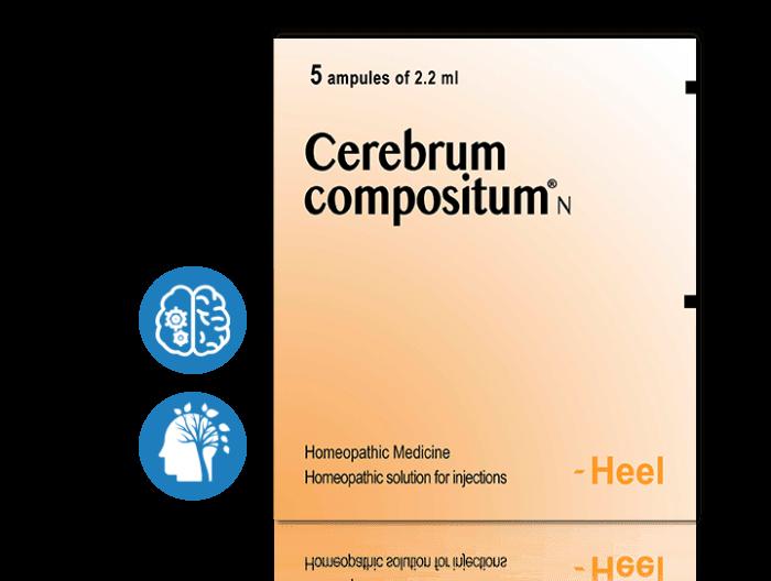 cerebrum-categories