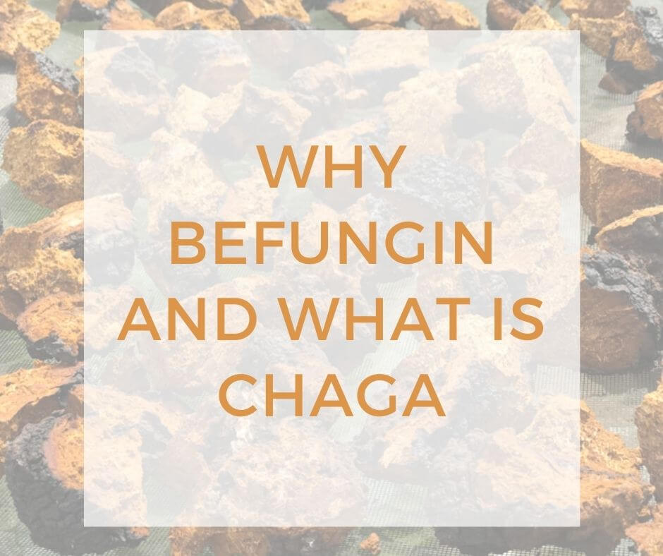 why befungin and what is chaga-2